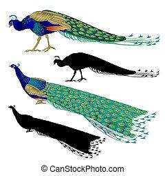 sylwetka, komplet, ptaszki, pawie, tropikalny, vector.eps, natura