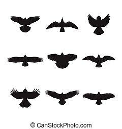 sylwetka, przelotny, komplet, ptak