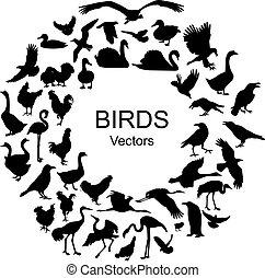 sylwetka, różny, gatunek, zbiór, ptaszki