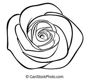 sylwetka, szkic, odizolowany, róża, czarnoskóry, biały