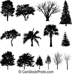 sylwetka, trees'