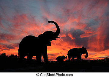 sylwetka, zachód słońca, słonie