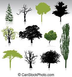 sylwetka, zbiór, drzewo