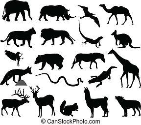 sylwetka, zwierzęta