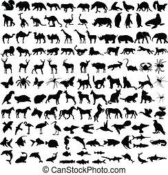 sylwetka, zwierzęta, zbiór