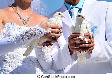 szambelan królewski, gołębice, panna młoda, biały