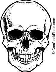 szczęka, biały, czarnoskóry, ludzka czaszka