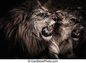 szczelnie-do góry, strzał, ryk, lew, lwica