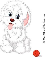 szczeniak, sprytny, biały, przedstawianie, lap-dog