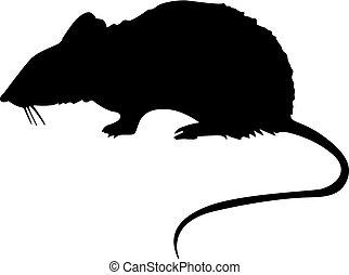 szczur, sylwetka