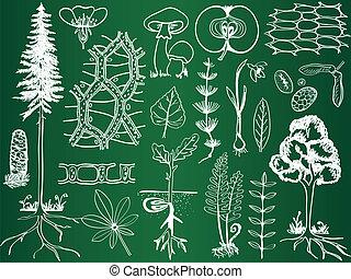 szkice, botanika, biologia, szkoła, -, roślina, ilustracja, deska