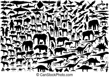 szkice, zwierzę