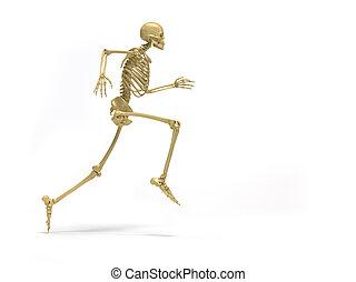 szkielet, wyścigi