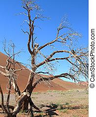 szkieletowy, kalahari, drzewo, pustynia