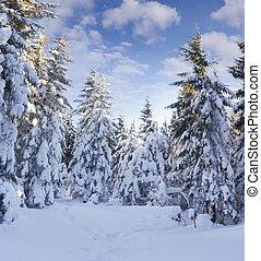 szron, góry, pokryty, drzewa, śnieg