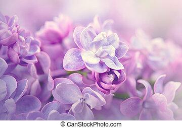 sztuka, bez, projektować, tło, fioletowe kwiecie, grono