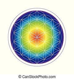 tęcza, życie, kwiat, barwny, geometria, kolor