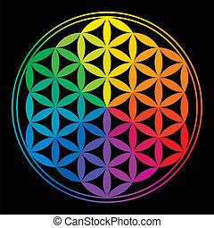 tęcza, życie, kwiat, kolor