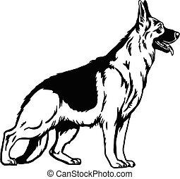 tło, ilustracja, biały, pose-, wektor, pies, pasterz, odizolowany, niemiec