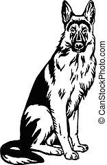 tło, ilustracja, biały, pose-, wektor, pies, posiedzenie, pasterz, odizolowany, niemiec