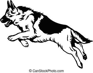 tło, -, ilustracja, skok, biały, wektor, pies, pasterz, odizolowany, niemiec