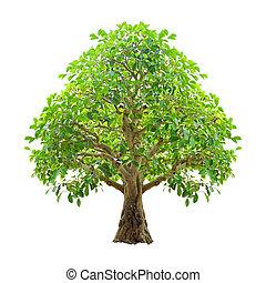 tło., included, drzewo, odizolowany, biały, obrzynek ścieżki