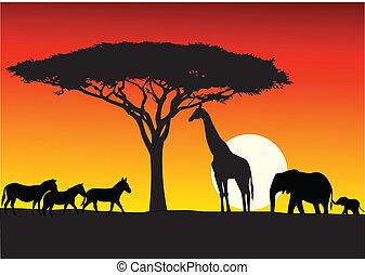 tło, safari