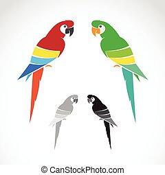 tło., wizerunek, wektor, biały, papuga