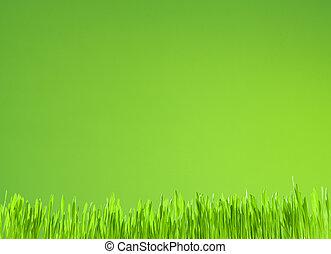 tło, wzrost, zielony, czysty, świeży, trawa