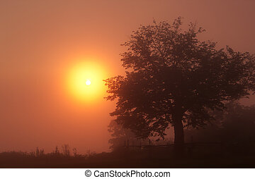 tengu, góra, wschód słońca