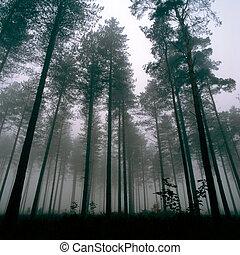 thetford, las, drzewa