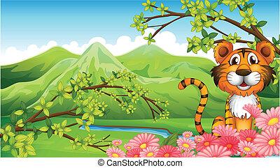 tiger, góry, kwiaty, wszerz