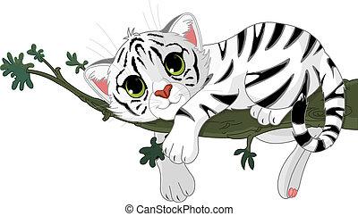 tiger, gałąź