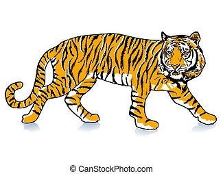 tiger, podkradać