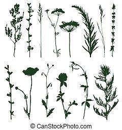 trawa, łąka