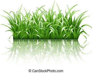 trawa, wektor, zielony