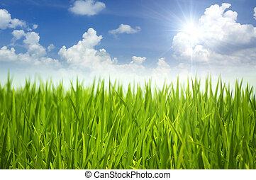 trawa, zielony, sky.