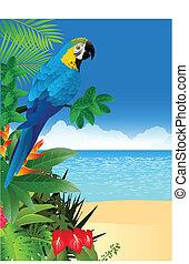 tropikalna plaża, ara, wstecz, ptak