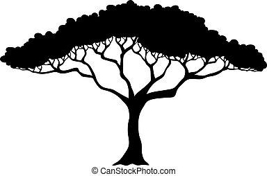tropikalne drzewo, sylwetka