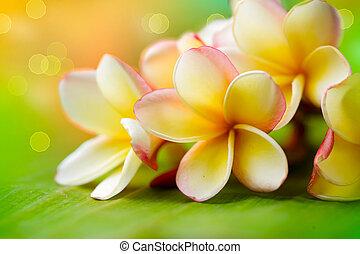 tropikalny, flower., frangipani, płytki, dof, plumeria., zdrój