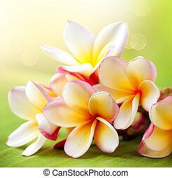 tropikalny, frangipani, plumeria, flower., zdrój