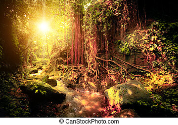 tropikalny, kaprys, kolor, las, surrealistyczny