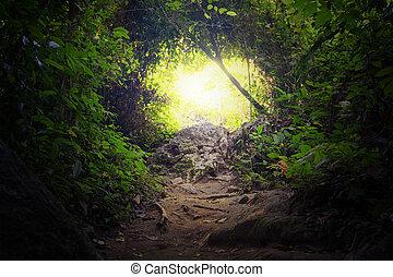 tropikalny, kasownik, tunel, forest., dżungla, droga, ścieżka, droga