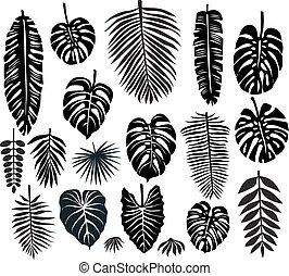 tropikalny, liście, komplet