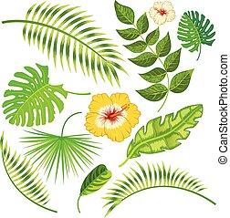 tropikalny, liście, kwiaty, wektor