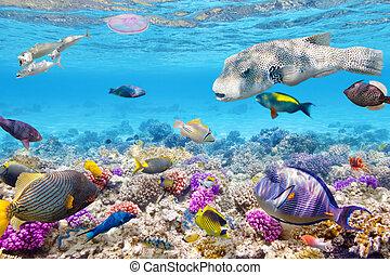tropikalny, podwodny, korale, świat, fish.