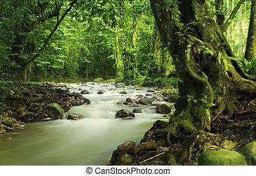 tropikalny, rzeka, rainforest