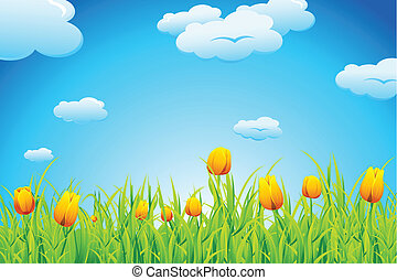 tulipan, ogród