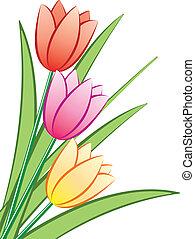 tulipany, grono, wektor