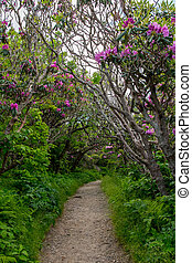 tunel, krzaki, rododendron